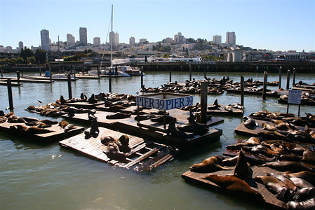 Sea lions near Pier 39, Fisherman's Wharf