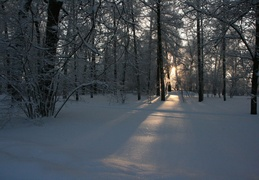 Winter forest at Tsarskoe Selo