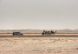 Camel racing near Madinat Zayed, Western Region